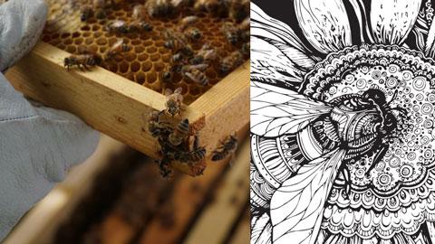 Bee Free Apiary